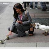 Representative photo.  Image found online at http://killingbatteries.com/