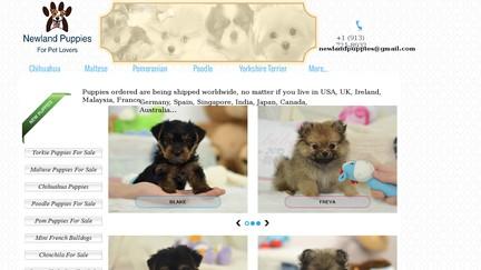 NewlandPuppies