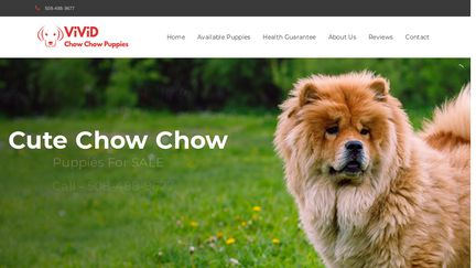 Vivid Chow Chow Puppies